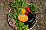20100824お野菜.jpg