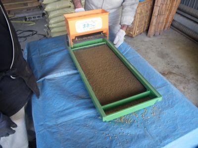 米の種まき2.jpg