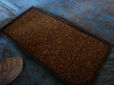 米の種まき3.jpg
