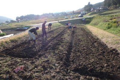 稲用ベット作り.jpg